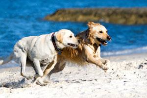 dogdayssummer_media_3_1340875709