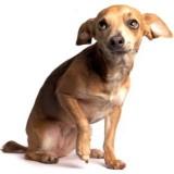 http___www_luckydogsportsclub_2_1335132550