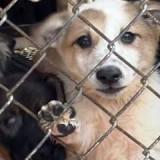 puppy_mill_2_1354200822