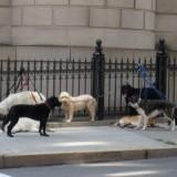 dogwalker_4_img_1025_3_1335386063