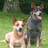 4pfoten-Hunde