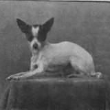 1910_chihuahua_4_1345462565