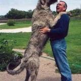 big_dogs06_7_1335919646