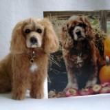 brandynoel_carolbryant_dog_miniature_1350230007