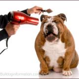 bulldog_comb_hairdryer_2_1342370387