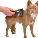 Chihuahua puppy is combed with a brush