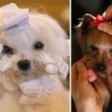 crufts_dog_hair_pr_1362011i_4_1342370390