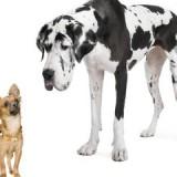 dog_breeds_0_1369231058