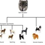dog_history_tree_0_1335966092