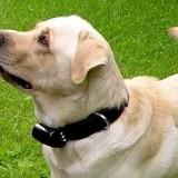 dog_shock_collar_1_1336669018