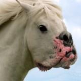 horse_dog__34088_1_1336818496