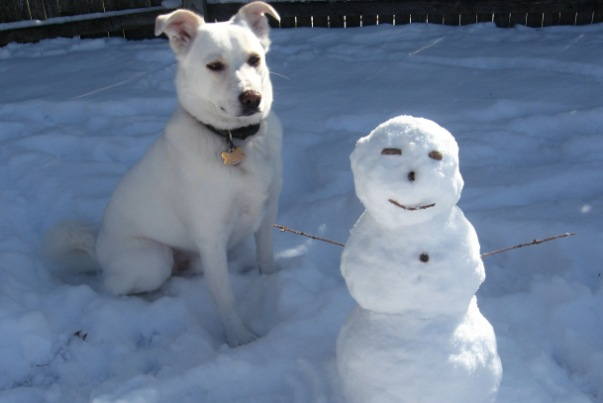 midget_snowman_or_giant_dog__by_puppyqueen14_0_1336870844