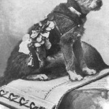 owney_hanging_out_on_a_mail_bag_6_1335962120