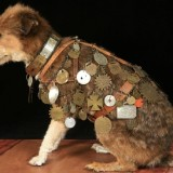 owney_usps_mascot_dog_with_medals_collected_7_1335962389
