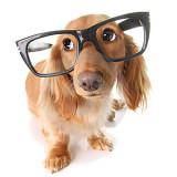 smartdog2_2_1346332566