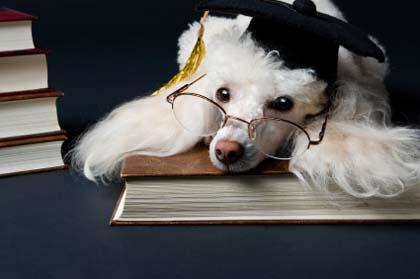smartdog_0_1346332563