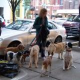 dogwalker_3_100_0557_2_1335386062