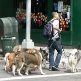 dogwalker_nyc_1_4_1335386065