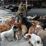 dogwalker_nyc_2_5_1335386066