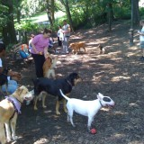 nyc_dog_run_2_img_1297_19_1335386346