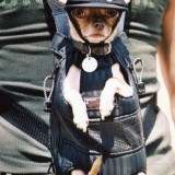 nyc_police_dog_15_1335386078