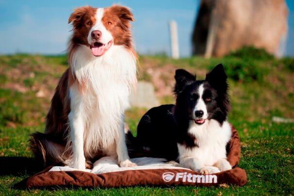Fitmin_ilustracni_foto_1[1]
