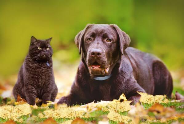 Image foto Foresto kocka a pes podzim_fotokredit animalhealth.bayer.cz